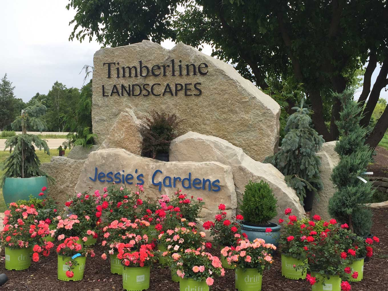 Timberline Landscape